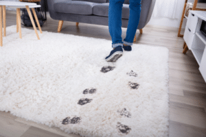 how to deodorize a carpet